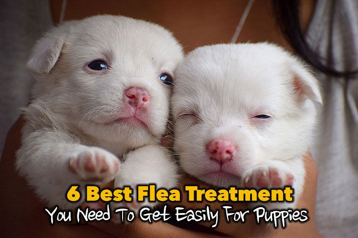 6 Best Flea Treatment For Puppies You Need To Get Easily Thinkofpuppy