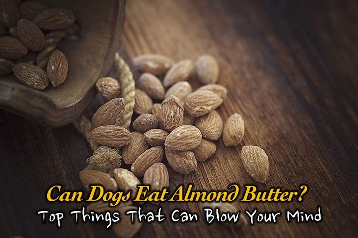 Can dogs eat almond butter