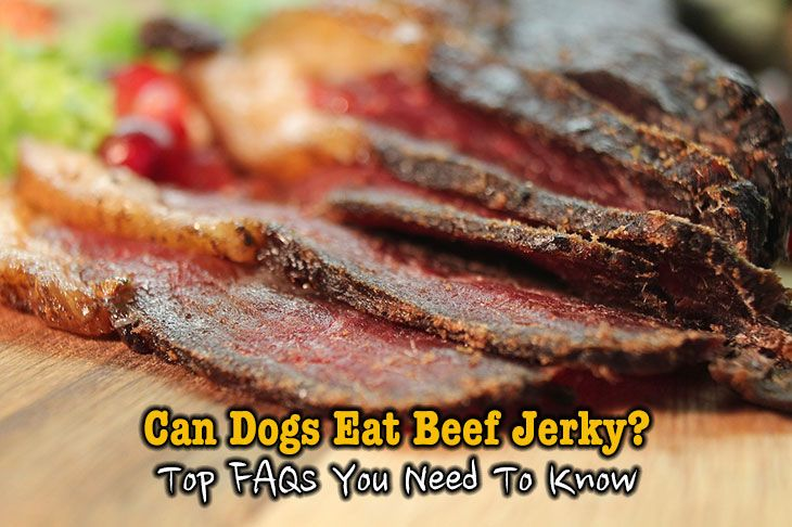 Can Dogs Eat Beef Jerky