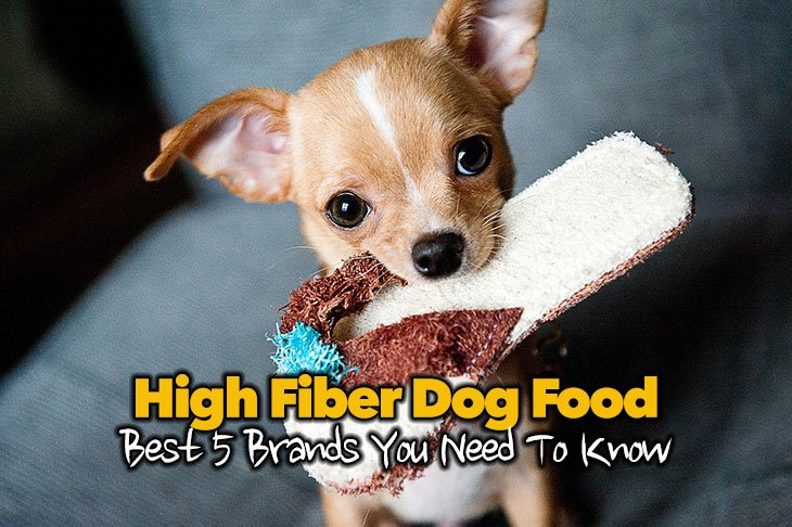 Best 5 High Fiber Dog Food Brands You Need To Know