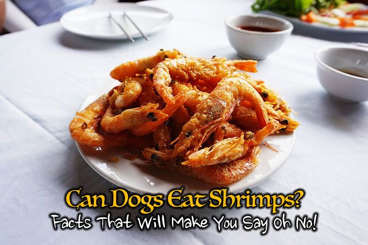 Shrimp For Dogs