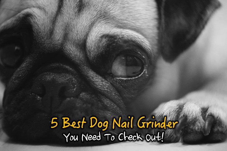 5 Best Dog Nail Grinder Reviews You Need To Check Out!