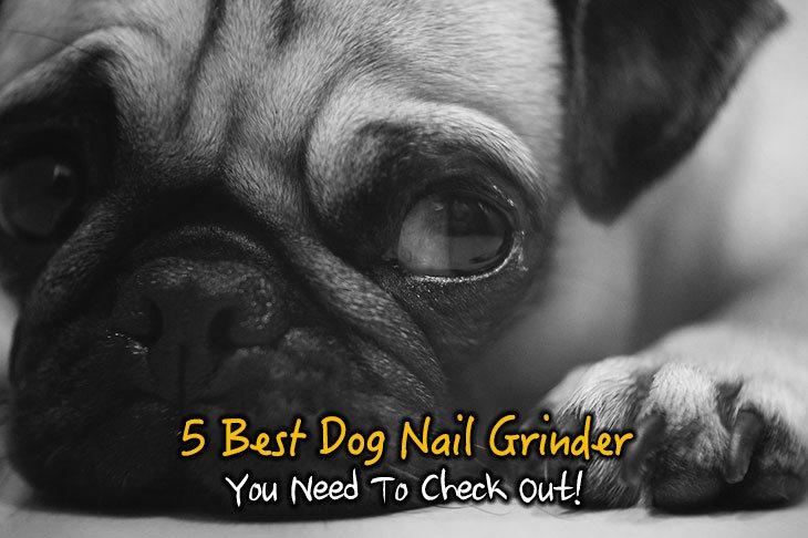 5 Best Dog Nail Grinder