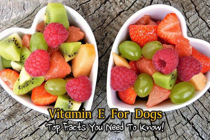 vitamin e for dog