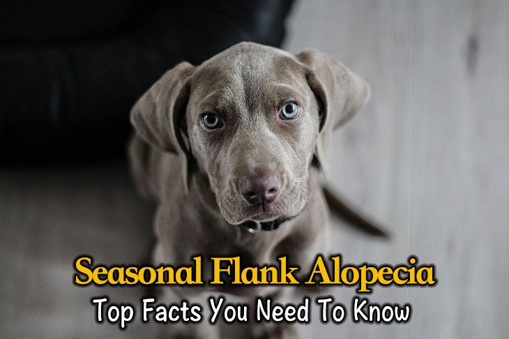 seasonal flank alopecia
