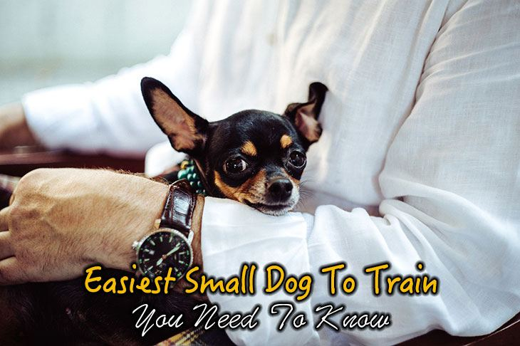 Easiest Small Dogs To Train