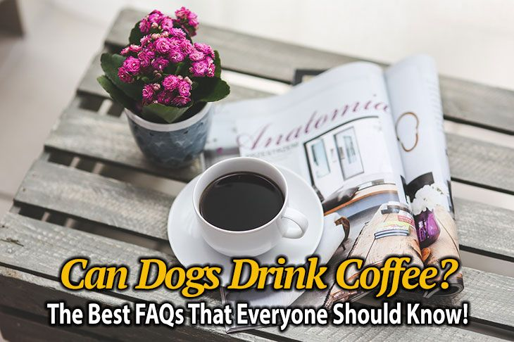 Can Dogs Drink Coffee