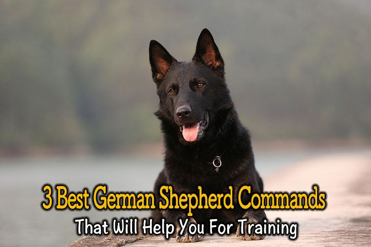 german shepherd commands