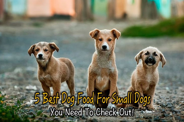 5 Best Dog Food For Small Dogs