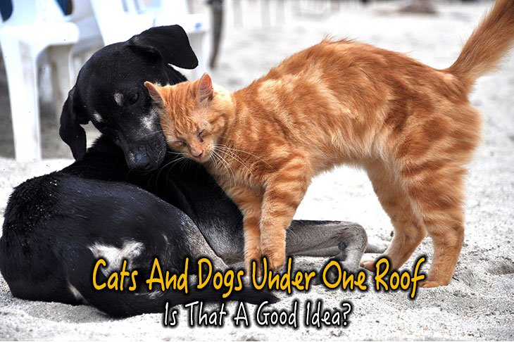 Cats And Dogs Under One Roof, Is That A Good Idea?