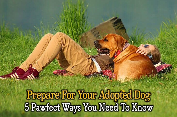 5 pawfect ways to prepare for your adopted dog