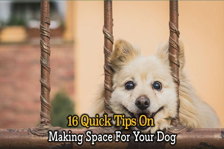 making space for your dog