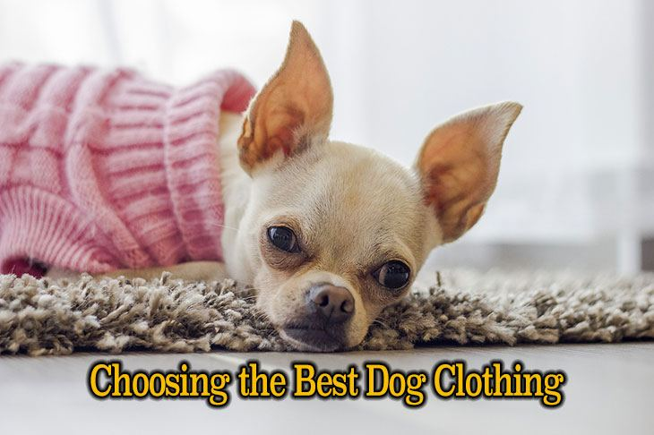 Ways for Choosing the Best Dog Clothing