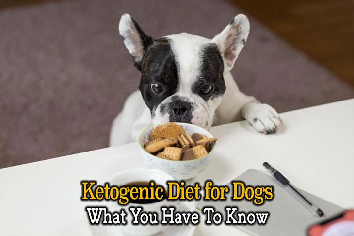 Ketogenic Diet for Your Dog